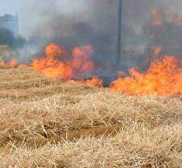 A fuoco un campo, in fiamme anche un maneggio