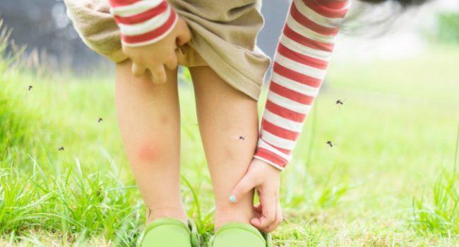 Zanzare in giardino: i rimedi migliori per debellarle