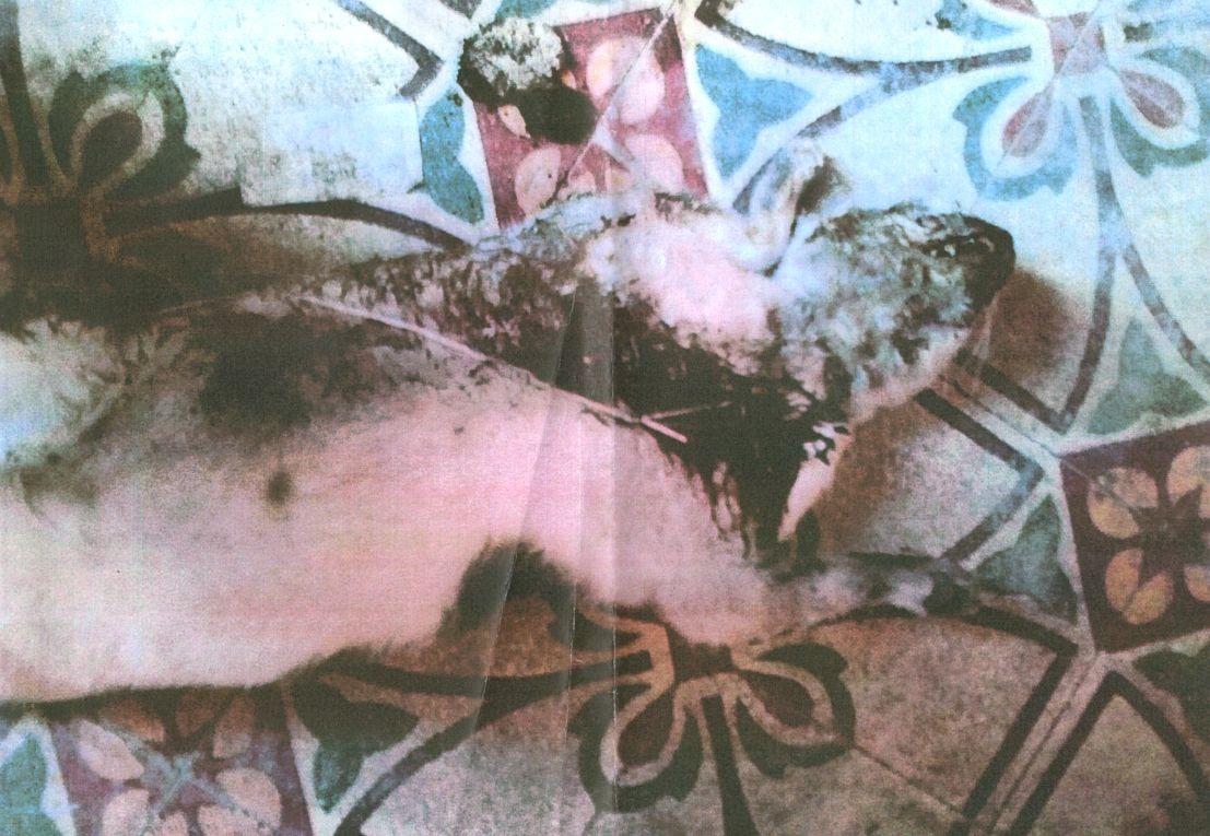 """La denuncia di due coniugi marsalesi: """"hanno massacrato di botte il nostro gatto"""""""