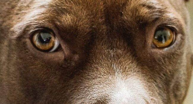 """Cane """"piange"""" legato alla ringhiera: è stato abbandonato dal padrone e liberato 24 ore dopo"""