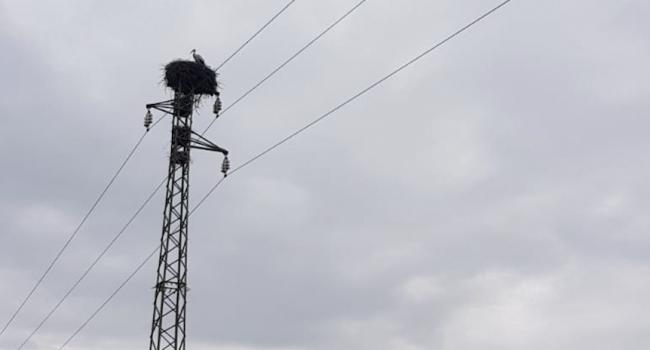 Marsala: cicogne europee nidificano su un traliccio. Le immagini